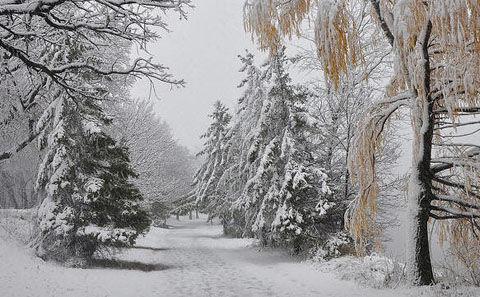 winter-arrives