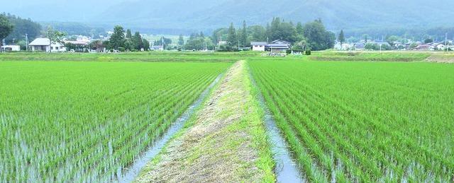 pict-farming-summer-01