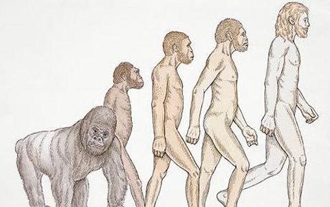 Neanderthal_1294840c