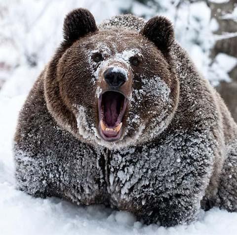 more-bear