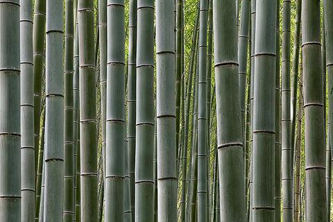 -Bamboo-grove-Arashiyama-Kyoto-Japan1