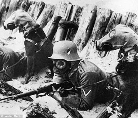 cachorros-mascaras-guerra-mundial-1