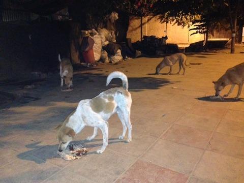 dog-feeding