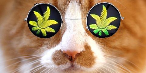 o-CAT-BRING-WEED-facebook
