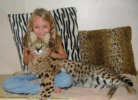 Savannah+Cat!