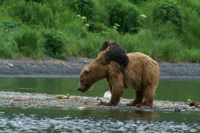 The-Bears-2-2