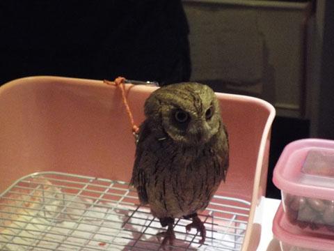 owls-15