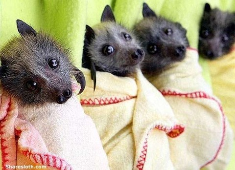 cute-bats-wrapped-up-in-blankets
