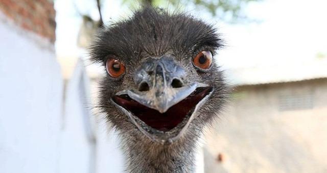 emu-smile