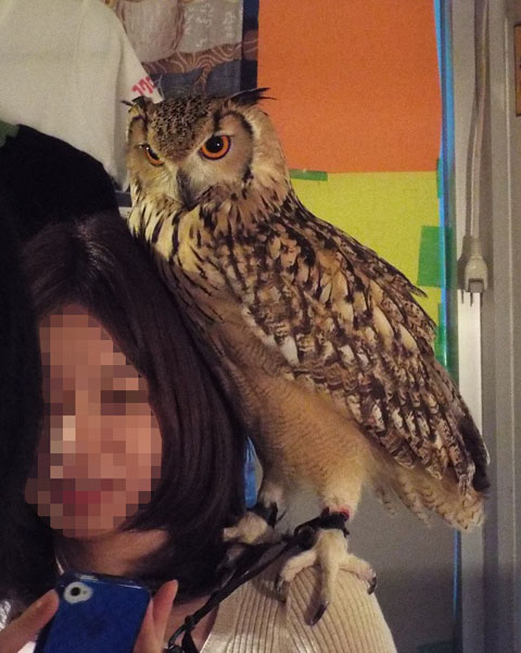 owls-4