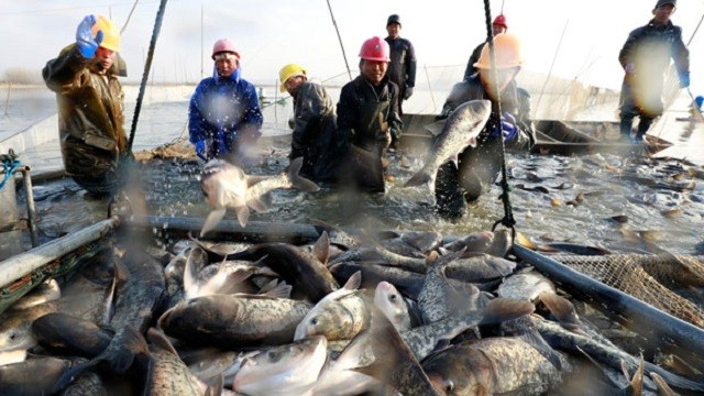 china-fishing-12292017