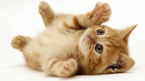 Cute-Picture-Cat-HD-Wallpaper-Desktop