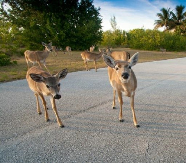 national-key-deer-refuge