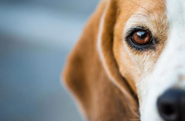 petmd-dog-eyes