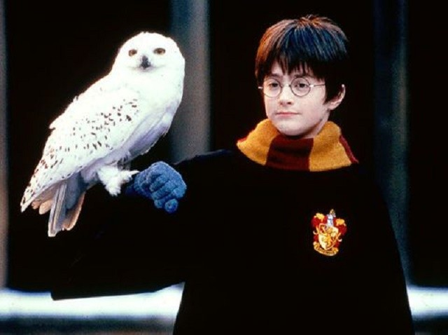 gallery-1449487321-harry-potter-hedwig-pic