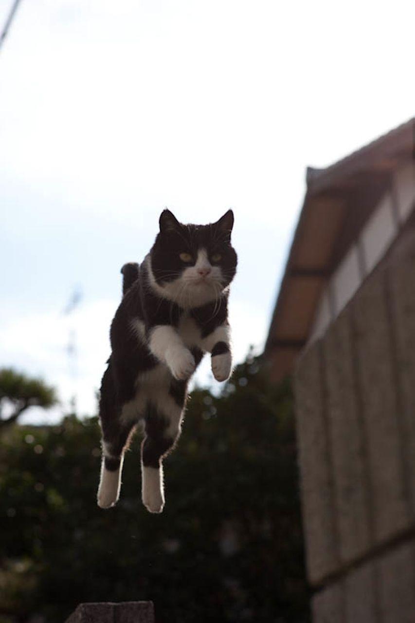 【JS】女子小学生 高学年と猫画像スレPart42【JS】 [無断転載禁止]©bbspink.comYouTube動画>3本 ->画像>5855枚