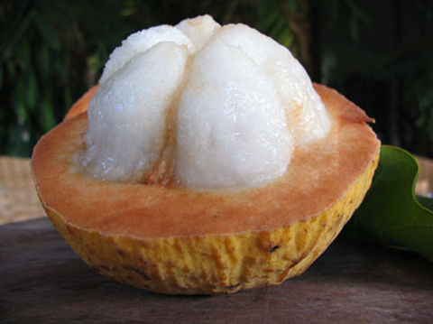 santol_fruit_l