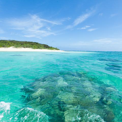 Corals-In-Yaeyama-Islands