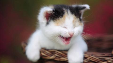 225516-kittens-cute-kitten
