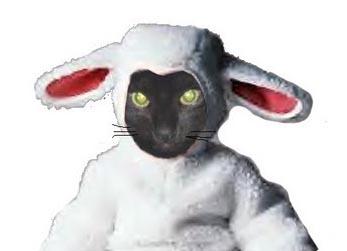 cat-lamb