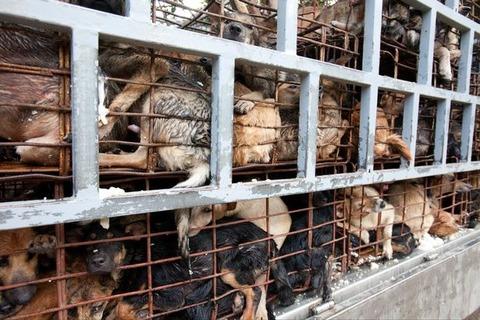 Vietnam-Meat-Market