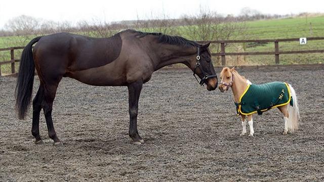 tiny-horses-23