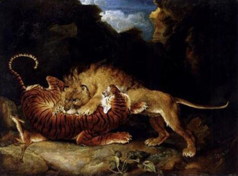 Tigers-and-Lions