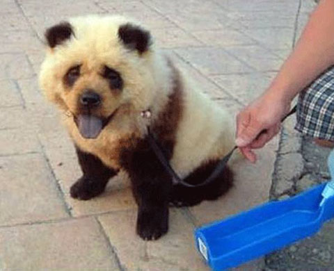 58304871-panda-dog