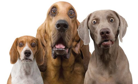 dogs_surprised