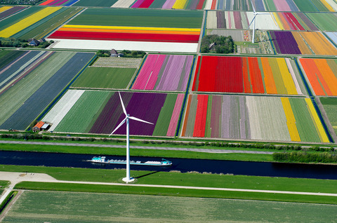 Tulip-Fileds-Noord-Holland