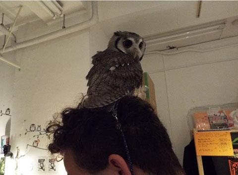 owls-43