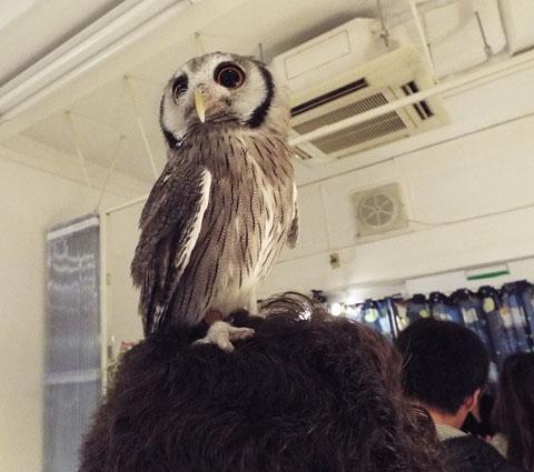 owls-42