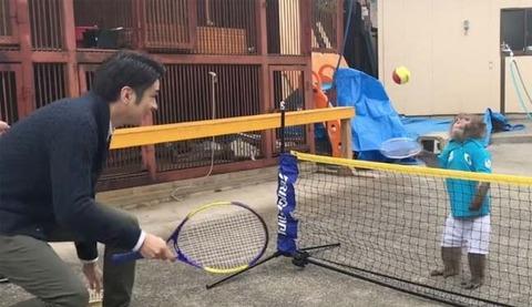 monkey-plays-tennis_650x400_81492068144