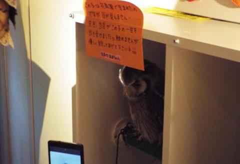 owls-51
