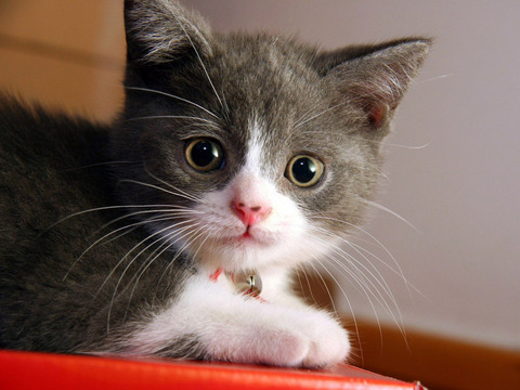 cute-meow-cat-wallpapers