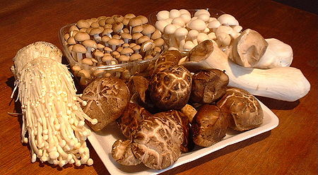 medicinal-mushrooms