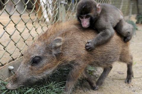 wild_boar_20120225