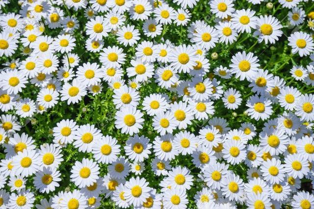 81421764-margaret-flowers