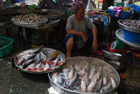 1920px-Basa_fish_-_Vinh_Long_Market