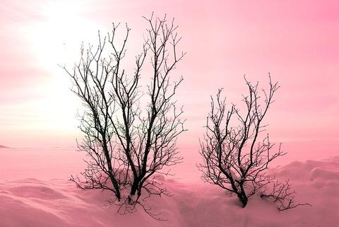 trees-242935_640