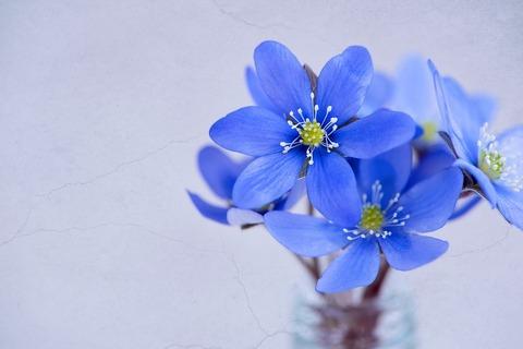 flowers-1338211_960_720