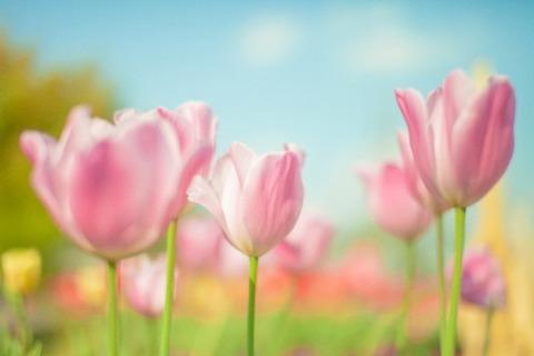 blog_flower1