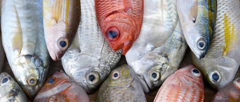 fishery_top-1030x440
