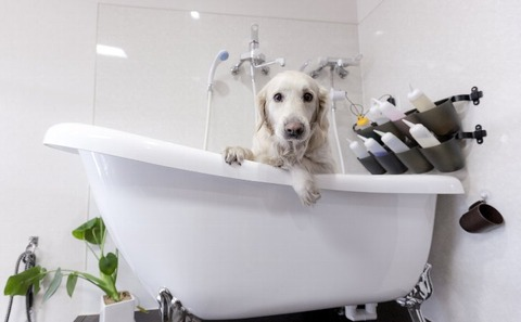 right-method-of-shampoo-and-shower-for-dog