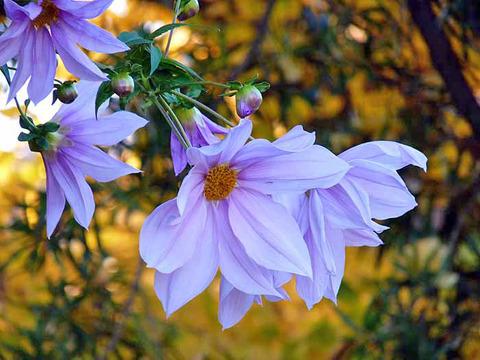 flower10l