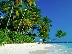 Crystal Hunter Tropical Islands