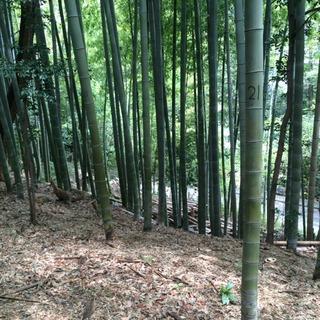 竹の子堀り!