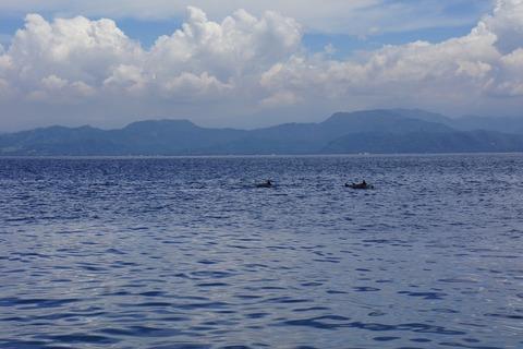 イルカさん20150205