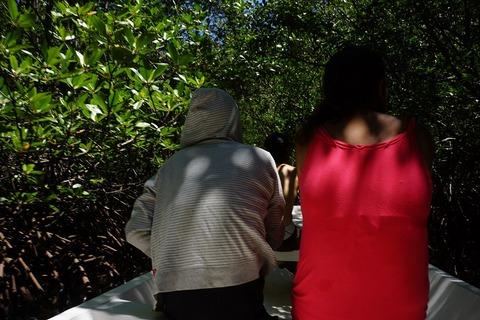 マングローブの林探検20150205