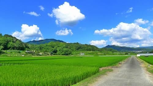 「田舎 夏休み」の画像検索結果